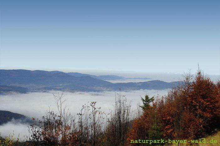 naturpark-bayer-wald.de Naturpark Bayerischer Wald e.V. Der Natur auf der Spur